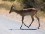 Namibia 2012 Tiere